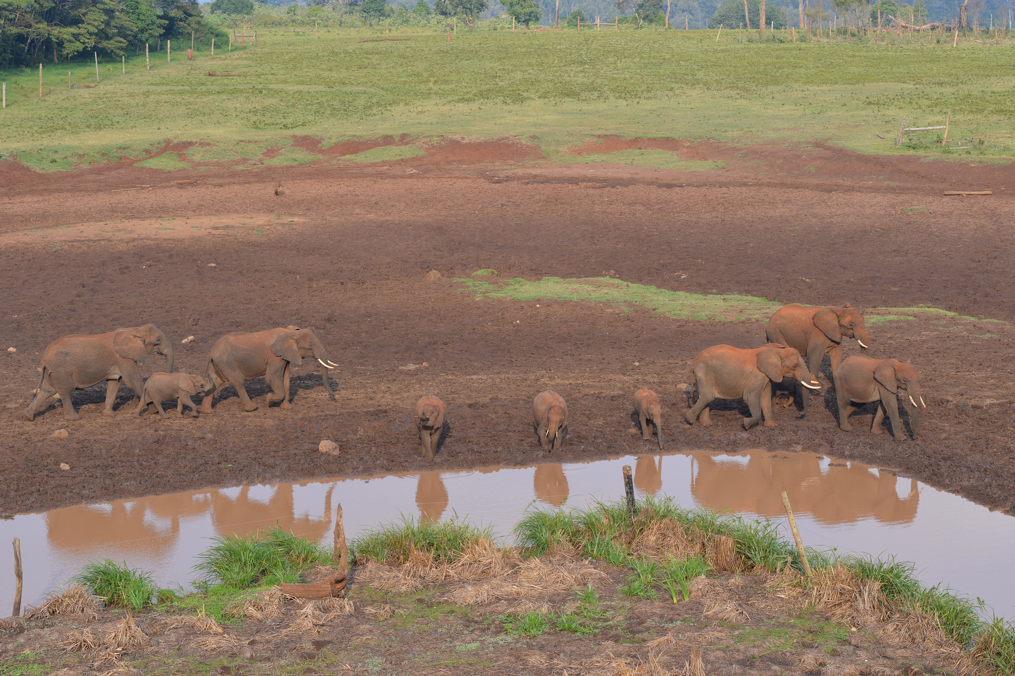 Elephants heading towards the water